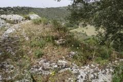 Domus de Janas Sas Puntas (Tissi)